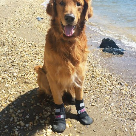 Paw Protector Dog Boots